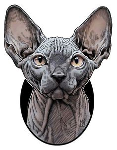 Illustration of the Sphynx cat breed. Illustration of the Sphynx cat breed. Art And Illustration, Gato Sphinx, Chat Sphynx, Desenho Tattoo, Cat Drawing, Drawing Tips, Cat Breeds, Cat Art, Sketches