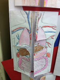 """To wrap up our journey through the organs of the human body, I had the students create a foldable that included all of the different body systems we have learned about.  They had to not only draw the organs on the front, but then write about them inside.  All of the vocabulary we have learned, the facts, and the functions were described.  Great way to summarize our learning, yet keep the kids interested!"""