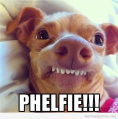 """""""Phelfie!""""  Why does this ridiculous picture make me laugh every time I see it?"""