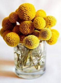 Currently loving: Yellow Pom Flowers Commonly called Billy Buttons this cheery yellow flower's botanical name is craspedia. The post Currently loving: Yellow Pom Flowers appeared first on Easy flowers. Mustard Yellow Wedding, Yellow Wedding Flowers, Yellow Flowers, Mustard Flowers, Fall Flowers, Summer Flowers, Cut Flowers, Wedding Colors, Vase Transparent