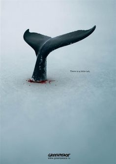 The Print Ad titled Кит (Whale) was done by BBDO Moscow advertising agency for Greenpeace in Russia. Creative Advertising, Advertising Poster, Advertising Design, Ads Creative, Save Our Earth, Campaign Posters, Best Ads, Web Design, Grafik Design