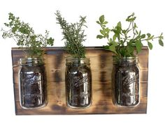 Vertical Garden Indoor Planters Indoor Herb Garden by Mintblooms