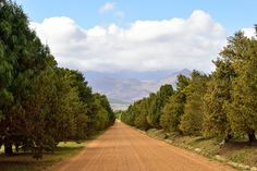 Rhodes Fruit Farms, Groot Drakenstein, Western Cape, South Africa | by South African Tourism