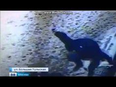 Полицейские Москвы ищут мужчину жестоко избившего женщину