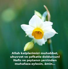 Allah kalplerimizi muhabbet, uhuvvet ve şefkatle doldursun! Nefis ve şeytanın şerrinden muhafaza eylesin, âmin...