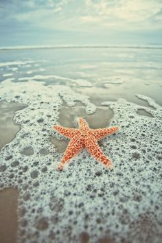 Starfish in water, ahhh we just love the Island Life! #travel #islands #starfish