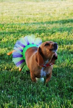 "Tinkerbell Dog Tutu  Fits Dogs Up To 22"" by KenziesTreasures"