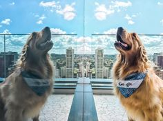 #tech #awesome #google This golden retriever named Google (!) taught us a lot about pet photography at a #GooglePhotos workshop in our São Paulo office. It's safe to say we've found our spirit animal. 🐶