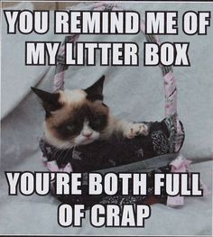 Grumpy Cat - Grumpy Cat - Ideas of Grumpy Cat - Grumpy Cat on You and his Litterbox The post Grumpy Cat appeared first on Cat Gig. Grumpy Cat Breed, Grump Cat, Grumpy Cat Quotes, Funny Grumpy Cat Memes, Funny Friday Memes, Funny Cats, Funny Minion, Funny Jokes, Hilarious