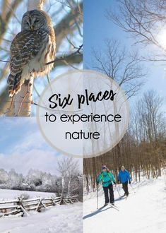 Six places to experience nature and wildlife in Lanark County - Lanark County Tourism Tree Borders, Ottawa Valley, Day Hike, In The Tree, Colorful Birds, Bird Watching, Old Town, Blue Bird, Wilderness
