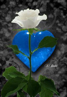 Wallpaper Nature Flowers, Beautiful Flowers Wallpapers, Beautiful Nature Pictures, Beautiful Rose Flowers, Romantic Flowers, Pretty Roses, Love Rose, Flower Wallpaper, Romantic Images
