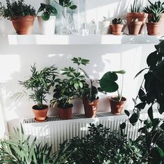 A #houseplant collection full of variety  : @byszkopt welcome to the #houseplantclub ✨