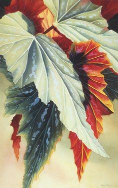 "Begonia - watercolor, 28"" x 18"" by Rachel B. Collins"