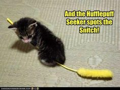And the Hufflepuff Seeker spots the Snitch!