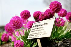 Kulenøkleblom Place Cards, Place Card Holders, Garden, Garten, Lawn And Garden, Gardens, Gardening, Outdoor, Yard
