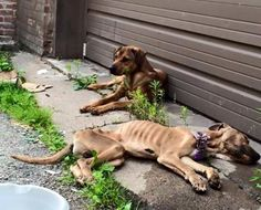 Please pray, I had to pull over to the side of the road to compose myself after seeing this post. Animals are not disposable, they are valuable living beings deserving of love and care. Please pray for these 2 babies. This is the bullshit going on in our backyards. They are at Rescue Warriors vets now. (Update: the male didn´t make it) https://www.facebook.com/photo.php?fbid=10204664833521611&set=a.1031361225147.2006004.1258884782&type=1