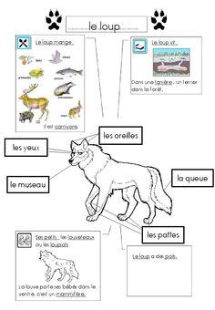 Loup, fiche documentaire