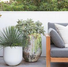 Grow Together, Balcony Garden, Beautiful Gardens, Magnolia, Exotic, Planter Pots, Nursery, Projects, Plants