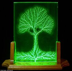 An oak tree created using the process. The science itself may be confusing - but the images are electrifying, by Bert Hickman