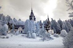 Peles in winter