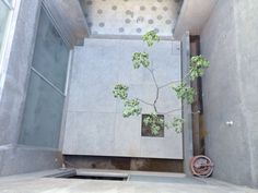 Process: view from roof, looking down onto inner courtyard of picked concrete with tree. Kitchen in random hex baldosas (mosaicos). Concrete, Condo, Wreaths, Modern, Kitchen, Projects, Home Decor, Tiles, Oaxaca