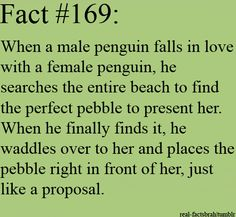 Penguin love <3  UMMMM @Kristin Plucker Marie you might need to put this somewhere!!!