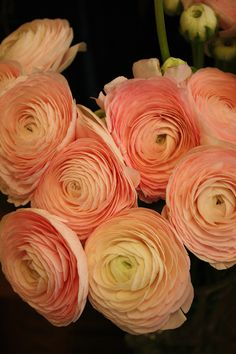 Beautiful Orange Ranunculus I like the peach and orange colors and their dimension.