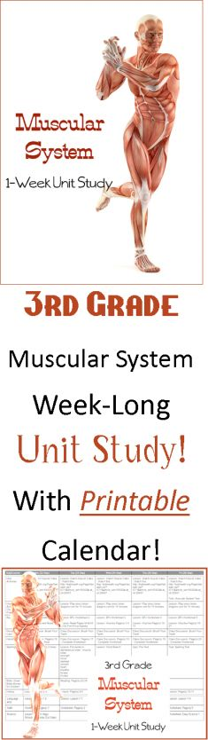 Chapter 10 Muscular System | Get Access To Unique Paper