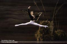 Evan McKie in Swan Lake. Photo by Aleksandar Antonijevic.