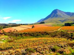 Creation Wines, Creation, wine, Hermanus, South Africa, Western Cape, Africa