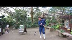 This Penguin Chasing Her Zookeeper Is Hilarious And Adorable This penguin seems determined to stay at her zookeeper's side at all times -- even if it means some high-speed waddling through Japan's Matsue Vogel Park. Funny Animal Videos, Funny Animals, Cute Animals, Clingy Baby, Penguin Love, Funny Penguin, Happy Penguin, Flappy Bird, Baby Penguins