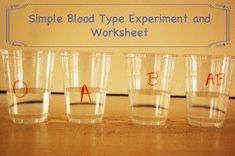 Easy experiment to determine which blood types are compatible. Free experiment worksheet use for E and MS Human Body Science, Human Body Activities, Human Body Unit, Human Body Systems, Science Activities For Kids, Science Ideas, Elementary Science, Science Fair, Science Lessons