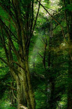 Slanic-Moldova, Romania  Forest Fairy by Eugen Vasilache