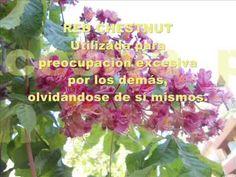 25 - Red Chestnut - Flores de Bach