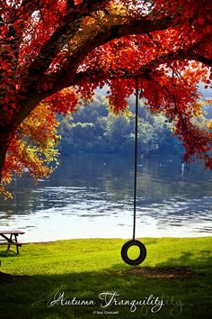 *Autumn - Tire Swing