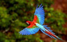Ultra HD flying parrot