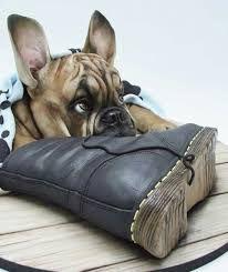 Bulldog chewing on a shoe Bulldog Cake, Bulldog Puppies, Dog Cakes, Cupcake Cakes, Cupcakes, Dog Names Unique, Extreme Cakes, 3d Dog, Cool Dog Houses