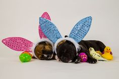 Happy Easter from Katniss, Buddy & Sunshine #pets #puppies #birds #photography