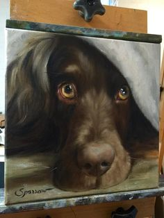 Portrait of a Boykin Spaniel in progress. For a painting of your dog contact Mary at http://www.marysparrow.com or http://www.facebook.com/hangingthemoon