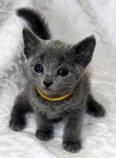 Cat-Beautiful-Kitten-With-The-Darkest-Eyes