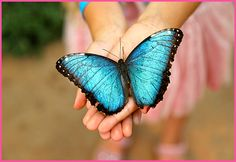Butterfly stock photos and royalty-free images, vectors and illustrations