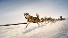 Dog Sledding Tours in Bethel, Maine