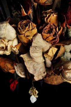 The palette of nature in decay.