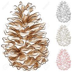 Images For > Vintage Pine Cone Illustration
