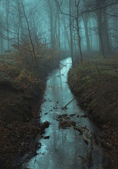 Foggy Forest and Stream Landscape Photography, Nature Photography, Travel Photography, Photography Classes, Beautiful World, Beautiful Places, Ombres Portées, Nature Sauvage, All Nature