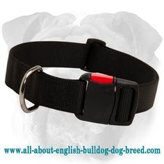 Simple Design Top Quality #Nylon #Collar with a Quick Release Buckle $19.90 | www.all-about-english-bulldog-dog-breed.com