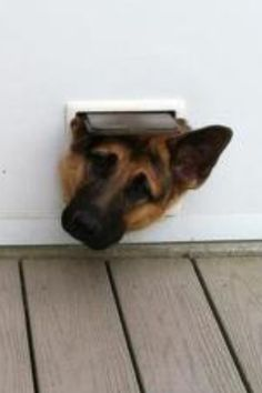 Silly Rommel -lol- scared ella will do this if I created a kitty door to the cat condo.