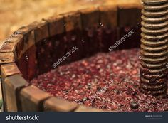 Grape Harvest: Winepress With Red Must And Helical Screw 写真素材 322301735 : Shutterstock Destiel, Harvest, Meat, Food, Solution, Alternative, Goal, Agile Software Development, Vine Yard