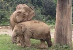 I have this added to my bucket list. Playing with elephants for at least a week in Thailand!!