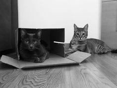 Nori & Kimi